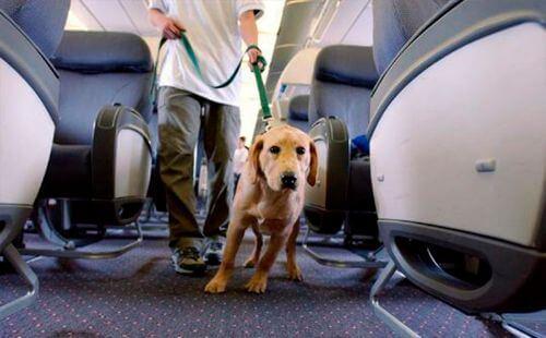 Перевозка домашних животных самолетом Победы